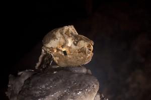 Crâne de singe au Laos - K16